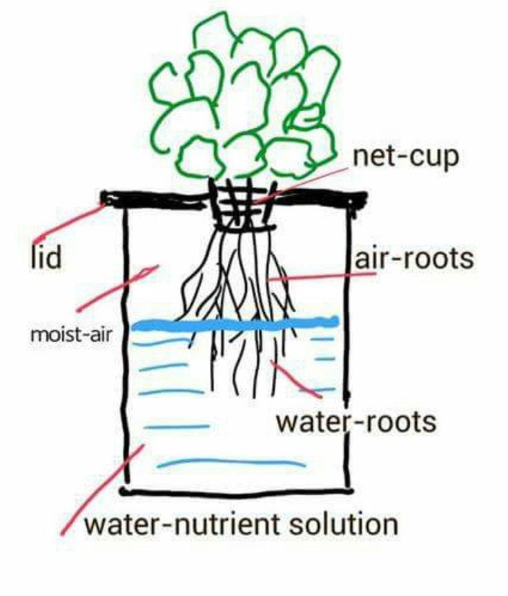 A basic Kratky hydroponics system