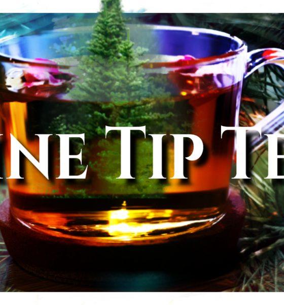 Pine Tip Tea, Great Bear Trail, Naturopathic, Homeopathic Remedies